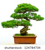Bonsai Pine Tree Against A...