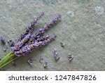 bouquet of lavender flowers on... | Shutterstock . vector #1247847826