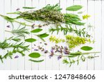 spice and herbal plants with... | Shutterstock . vector #1247848606