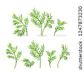vector fennel dill greenery... | Shutterstock .eps vector #1247873230