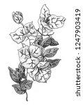 white bougainvillea flower.... | Shutterstock . vector #1247903419