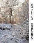 snowy carpathian forest | Shutterstock . vector #1247947126