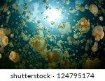 Millions Of Endemic Jellyfish ...