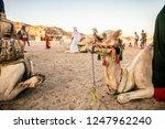 camel in the desert | Shutterstock . vector #1247962240