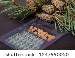 glass bottles with corks in the ... | Shutterstock . vector #1247990050