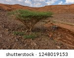 slopes of the al wahbah...   Shutterstock . vector #1248019153