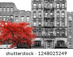 Red Tree In Black And White...