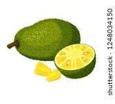 jackfruit isolated on white...   Shutterstock . vector #1248034150