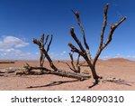 ouarzazate  morocco   october... | Shutterstock . vector #1248090310