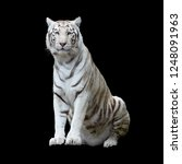 White Tiger  A Variant Of The...