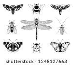 Insects Set Vector Hand Drawn...