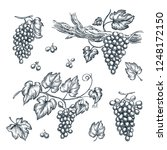 grape on vine vector sketch... | Shutterstock .eps vector #1248172150