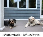 two cute dogs laying on the... | Shutterstock . vector #1248225946