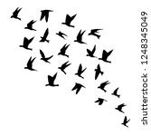 silhouette of flying birds on... | Shutterstock .eps vector #1248345049