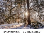 forest under snow on a sunny... | Shutterstock . vector #1248362869