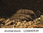 closeup of claw of komodo... | Shutterstock . vector #124840939