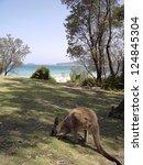 blick von batemans bay strand ... | Shutterstock . vector #124845304