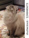 cat sapphire model animal | Shutterstock . vector #1248480673