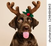 portrait of a cute labrador... | Shutterstock . vector #1248484843