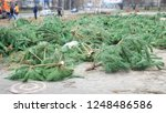 felled  christams trees  firs ... | Shutterstock . vector #1248486586