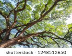 view from the bottom  the... | Shutterstock . vector #1248512650