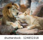 Couple Of African Lion