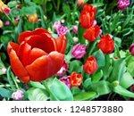 tulip with flower arrangement | Shutterstock . vector #1248573880