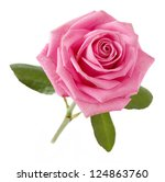 Pink Rose Isolated On White...