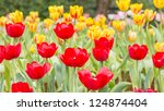 red and yellow tulip flower... | Shutterstock . vector #124874404