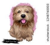 norfolk terrier puppy british... | Shutterstock . vector #1248760003