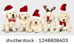 group of adorable golden... | Shutterstock . vector #1248808603
