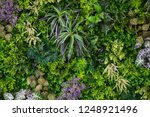 Green Leaves With Vegetation O...
