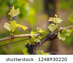 closeup macro detail of the...   Shutterstock . vector #1248930220