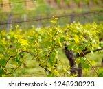 closeup detail of multiple...   Shutterstock . vector #1248930223