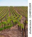 wide landscape of a large...   Shutterstock . vector #1248931009
