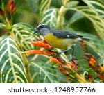 closeup of a small gray  yellow ... | Shutterstock . vector #1248957766