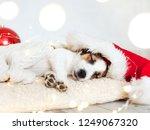 sleeping dog in christmas hat | Shutterstock . vector #1249067320