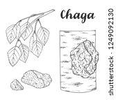 chaga mushroom  inonotus... | Shutterstock .eps vector #1249092130