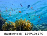 shallow coral reef and red... | Shutterstock . vector #1249106170