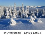 frost covered trees in the... | Shutterstock . vector #1249112536