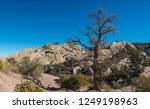 Tall Dead Tree Stands In The...