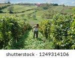 croatian winemaker in his small ... | Shutterstock . vector #1249314106