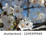 close up of beautiful white...   Shutterstock . vector #1249399969
