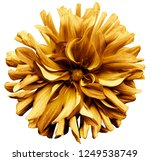 yellow brown flower dahlia  on...   Shutterstock . vector #1249538749