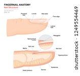 science of human body.... | Shutterstock .eps vector #1249554469