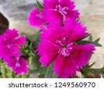 hd flower background texture... | Shutterstock . vector #1249560970