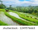 jatiluwih rice terraces  bali ...   Shutterstock . vector #1249576663