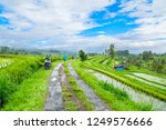 jatiluwih rice terraces  bali ...   Shutterstock . vector #1249576666