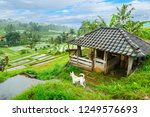 a dog  a cow in the barn ...   Shutterstock . vector #1249576693