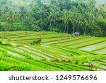 jatiluwih rice terraces  bali ...   Shutterstock . vector #1249576696